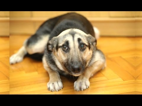 Funny Dogs Who Don't Want To Take A Bath – Try Not To Laugh [BEST OF]