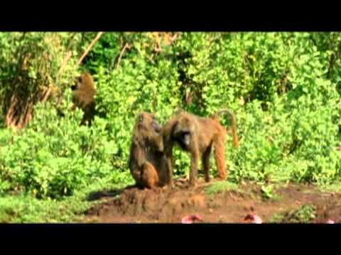 National Geographic Destination - Eastern Africa