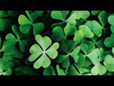 Lucky Beat(Prod. Db Productions)-Instrumental