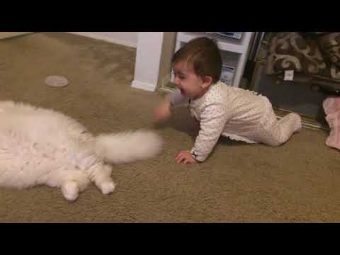 Baby scare the Cat Sushi the cat