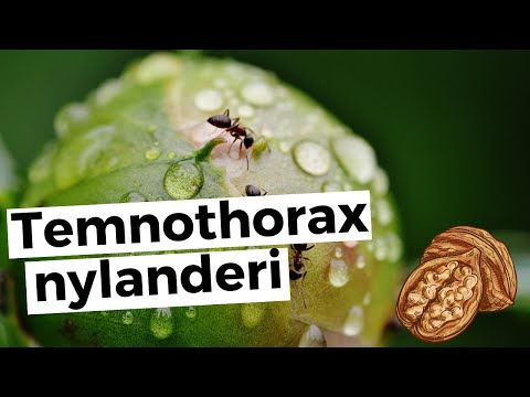 Найден паразит, который дарит насекомым «вечную молодость» (+видео)