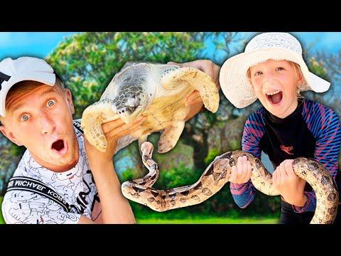 Вопрос: Что делать если встретил в парке черепаху?