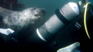 Playful Seal Part 1 - DiveMania Scuba