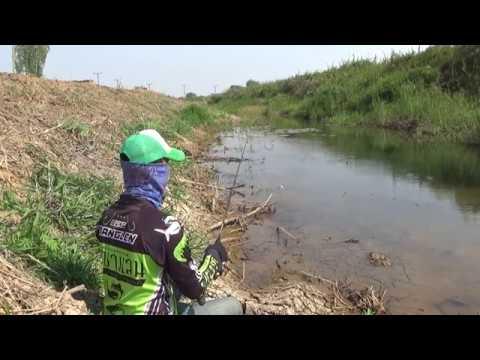 Snakehead Fish How to use jump frog on clear creek ส่ายแก้คันจิ๋ว เจอน้ำใส ต้องเข้าหมายอย่างนอบน้อม