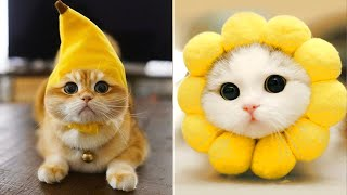 Cute Animals I found on TikTok 🥰