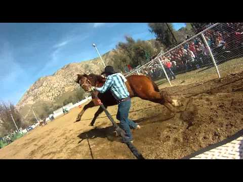 Wild horse race Team buntin first person cowboy