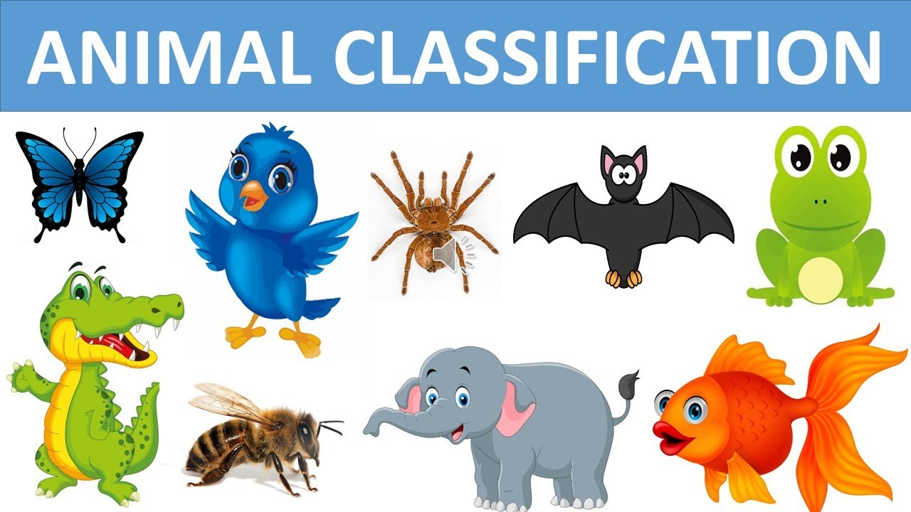 Classification of Animals || Types of Animals || Animal Groups || Science  videos - YouTube