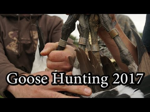 Opening Weekend Goose Hunting Pennsylvania 2017