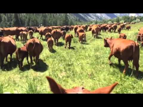 """(""""How to ride in a cattle drive"""")"""
