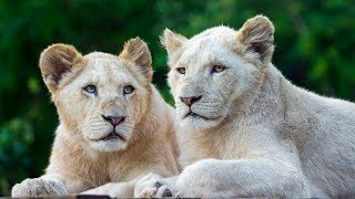 The Rare and Exotic Animals - Best National Geographic Documentary Ever