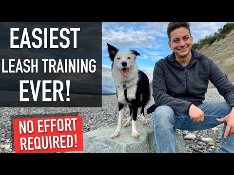 Even if Your Dog is TERRIBLE on LEASH