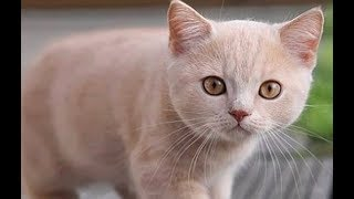 Cat Lovers - Enjoy Cute Funny Cats and Kitten Videos Mix # 51