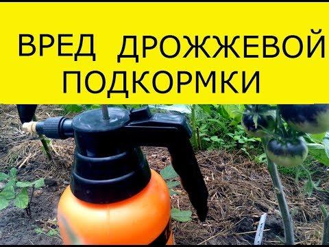 Вопрос: Зачем огурцы поливают раствором дрожжей и сахара?