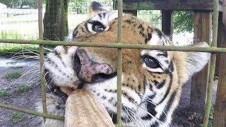 Tiger Treats in 360!!