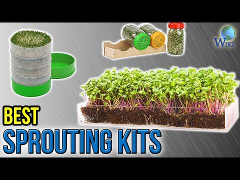 8 Best Sprouting Kits 2017