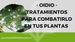 oidio tratamientos para combatirlo en tus plantas