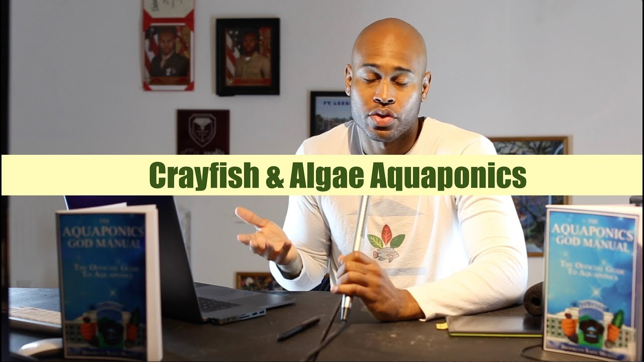 Crayfish and Algae Aquaponics | Ask The Aquaponics God
