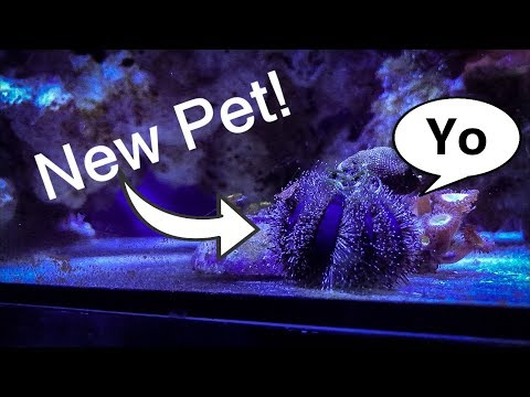 Pet Sea Urchin!