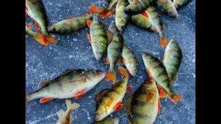 Видио о зимней рыбалке! Зимня рыбалка на окуня! Методы ловли окуня!