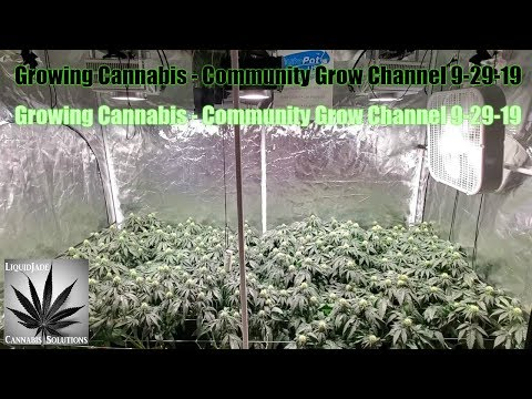 Growing Cannabis - Community Grow Channel 9-29-19
