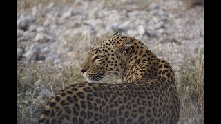 Animals of Namibia: Part VI