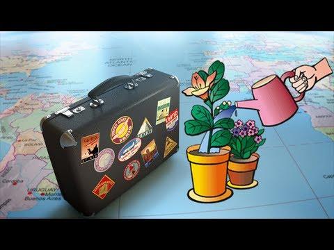 Полив комнатных растений во время отпуска или командировки!