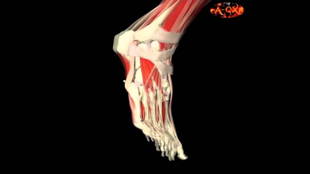 3D Анатомия м...