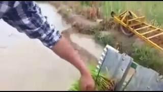 धान रोपाई की चीनी मशीन