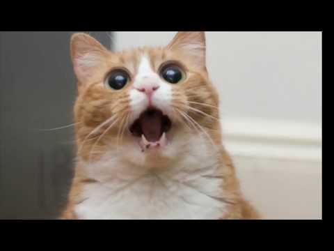 Les chat les plus chelou