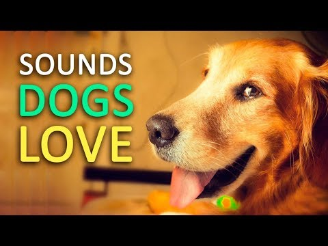 5 Sounds Dogs Love the Most HD