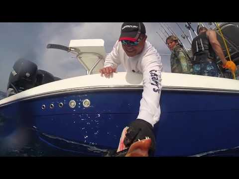 Giant Dog Snapper Pole Spearing Bahamas 2015
