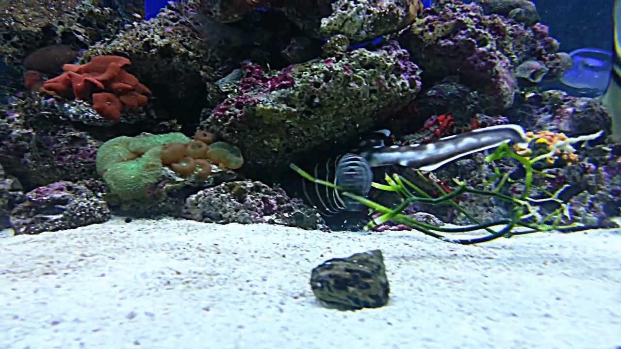 bamboo shark tank - photo #19