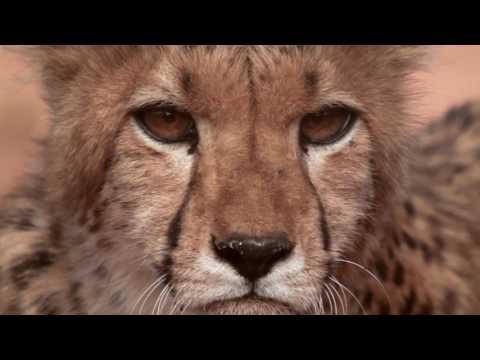 Wild Jobs Namibia S01 E04