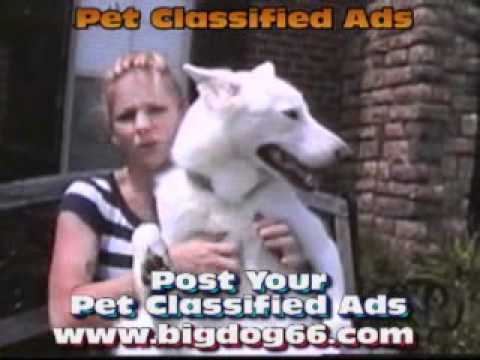 Pet Classifieds