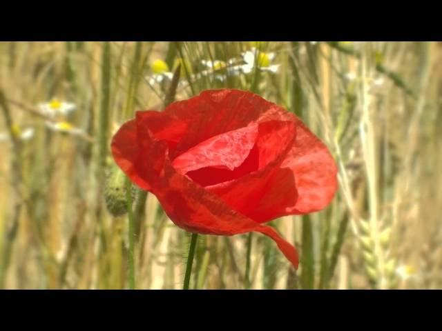 Ich wart auf dich im Abendwind · Trailer zum Hörbuch · Gelesen von Andrea Sawatzki