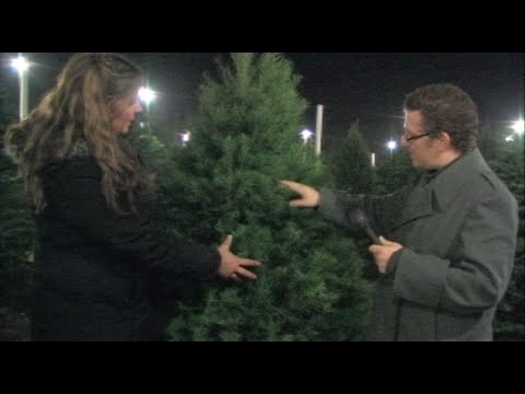 Pick The Best Christmas Tree For You - Different Types Of Christmas Trees - Information & Advice