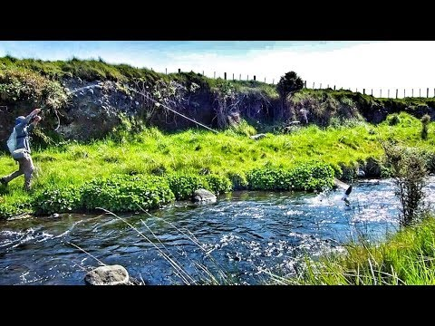 Fishing A SMALL Stream For BIG Browns [Dry Fly]