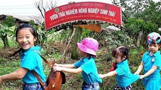 Gia Linh cùng các bạn trường mầm non MIPEC thăm cây, bắt vịt trong vườn sinh thái