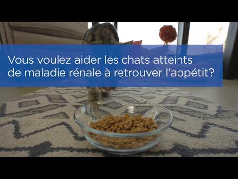 Aider Les Chats Souffrant De Maladie Rénale à Retrouver L'appetit