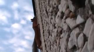 Белка на стене дома