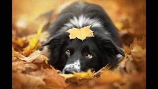 Самые красивые фотографии собак