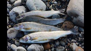 Эта рабочая мушка спасла рыбалку!!! Ловля хариуса весной на реке Енисей на тирольскую палочку!