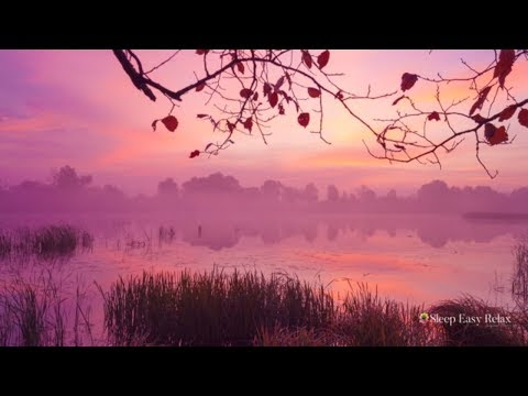 Calming Sleep Music, Remove Anxiety and Sleep Problems, Deep Dreams, Healing Relaxation ★ 29