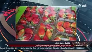 """""""الزراعة"""": شائعات إصابة الفراولة بفيروسات """"تشويش"""""""
