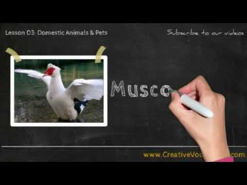 Domestic Animals & Pets Vocabulary Picture Video Lesson -  Learn List of Domestic Animals & Pets - 6
