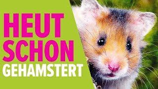 Heut schon gehamstert?  | NORBERT ZAJAC | Zoo Zajac, Duisburg