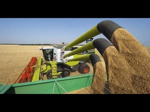 В Воронежской области во всю идет уборка зерновых