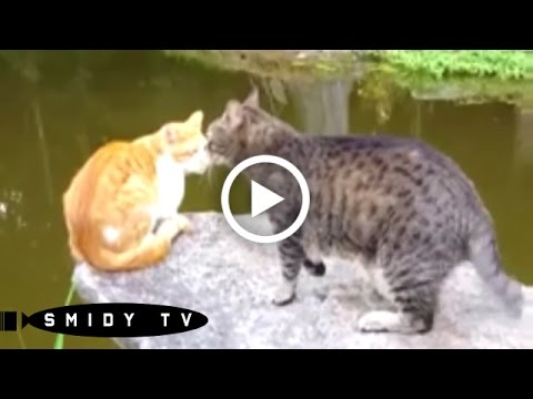 Funny Videos of Cats Fighting | LoveToKnow