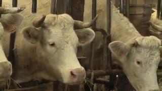 La viande bio séduit de plus en plus les Français