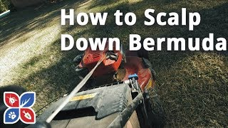 Do My Own Lawn Care  - How to Scalp Down Bermuda Grass